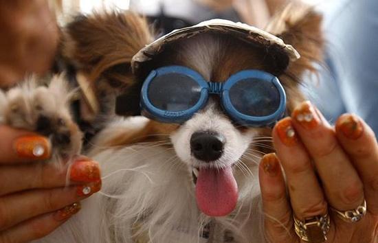 Pets wearing glasses