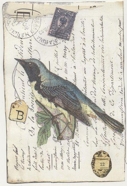bird on postcard
