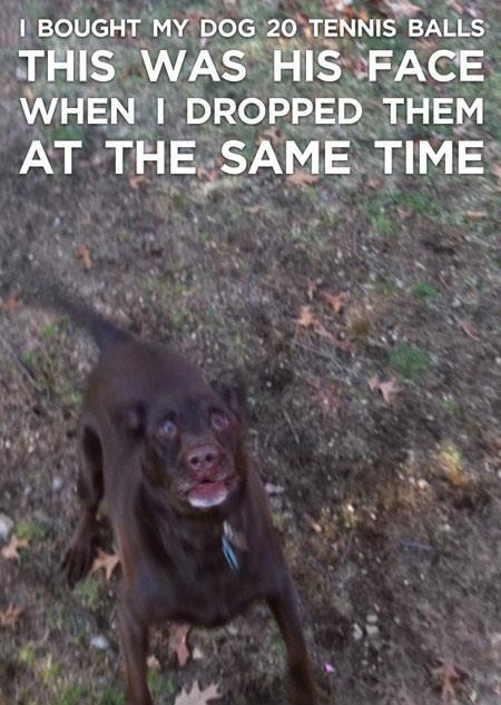 Hahaha! This would be my dog!