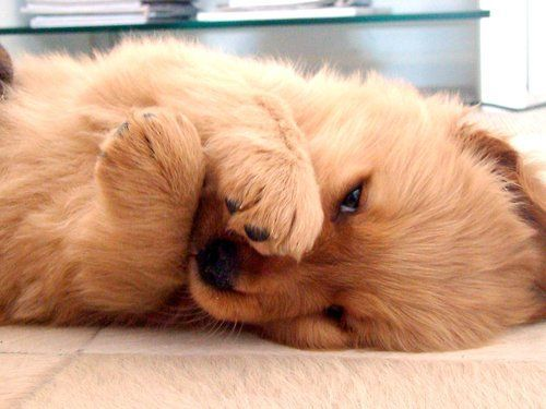 Amazing & Cute Pet Pics, puppy- I'm a shine puppy :)