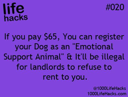 *gets dog*
