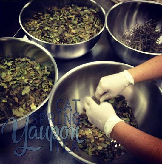 Cat Spring Yaupon Tea being sorted and prepared for packaging