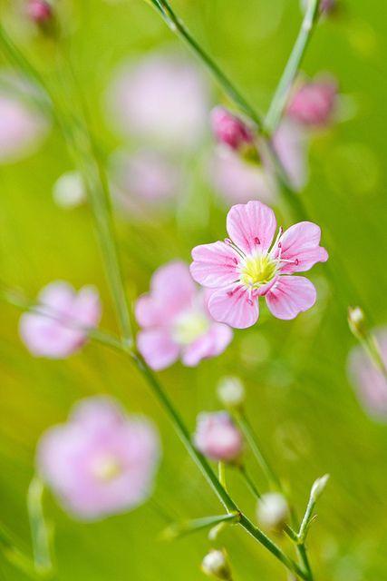 Sweet Little Pastel Pink Flowers