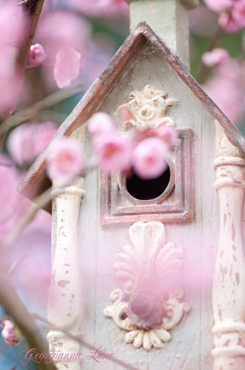 bird house shabby