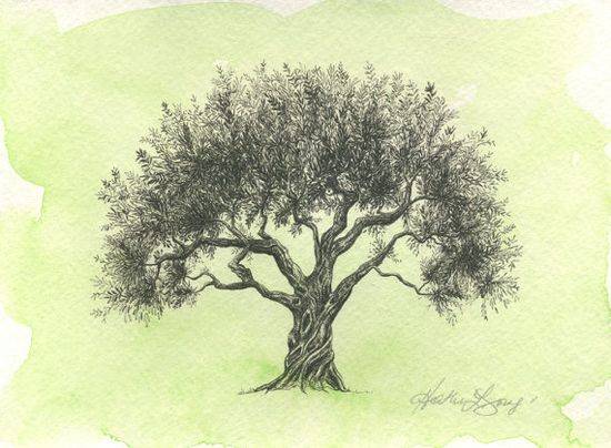 Olive Tree Drawing Moss Green Watercolor Painting by theinklab, $35.00