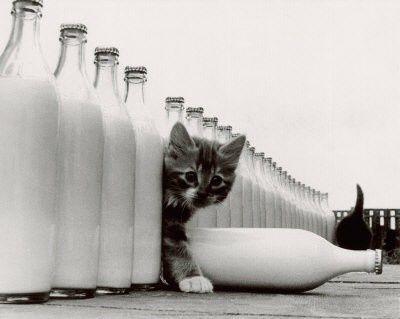 kittens kittens kittens.