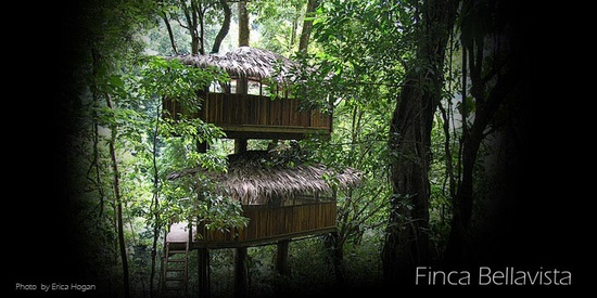 Sustainable treehouse community in Costa Rica.
