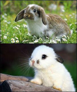 ?•?•?•?•?•? Animals ?•?•?•?•?•?
