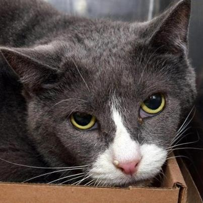 **URGENT**SAM IS 11 YRS OLD AND WILL BE KILLED TODAY JAN 16, 2013/WEDNESDAY. HIS OWNER IS MOVING TO FLORIDA AND DECIDED AFTER 11 YRS TO DUMP HIM AT HIGH KILL SHELTER, NY! WHAT A THING TO DO TO A LOYAL FRIEND AND COMPANION OF 11 YRS! HELL....NEVER CEASES TO AMAZE ME HOW PEOPLE CAN TREAT THEIR PETS....I'M FINISHED ...I'M DONE...GONE WITH YOU...  INFO & CONTACT ON FACEBOOK: PETS ON DEATH ROW, NEW YORK /CATS ON DEATH ROW.....HELP ME SAVE HIM....VERY THANKFUL FOR HELP SHARING...., DANA
