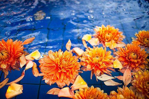 modern, simple wedding flowers, color blocking, wedding flower decor, pantone, bold, lush, vibrant flower arrangement, orange dahlias floating ambiance