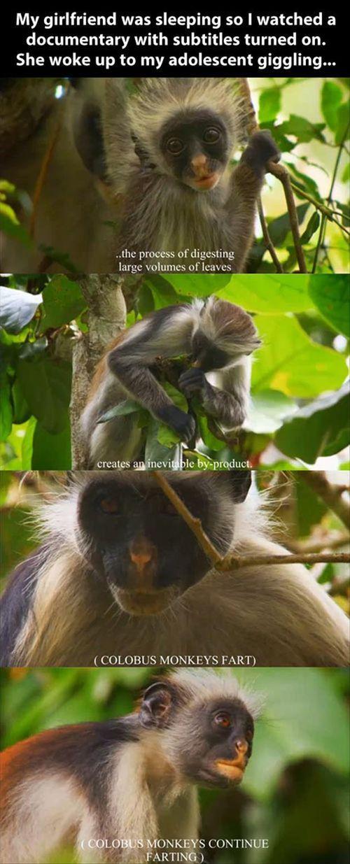 Oh man, monkey farts are always funny hahaha