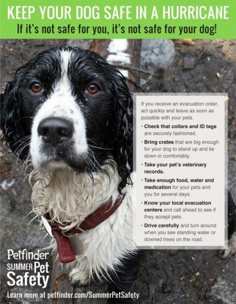 Protect Your Pet in Adverse Weather Conditions. Thanks to @Petfinder.com.com for the amazing infographic!
