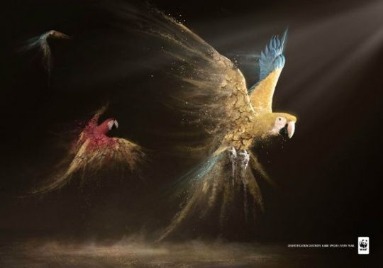 WWF Desertification: Parrots by Contrapunto BBDO     Animals in Print Ads