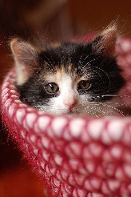 baby sulia.com/...