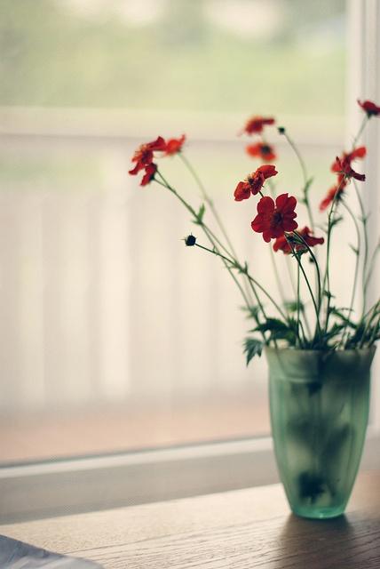 Simple flower vase by window.