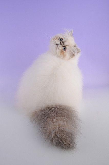 Fluffy & beautiful