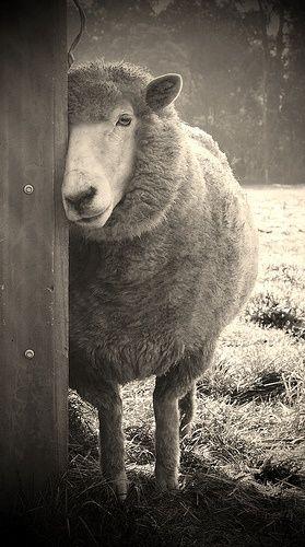 ?[sheepish] The Gifts Of Life