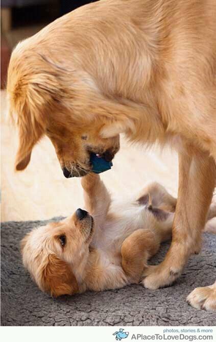 motherhood #dog