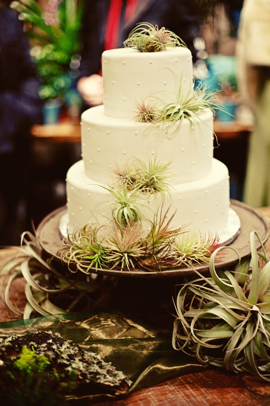 Wedding cake with air plants. Cool!!!