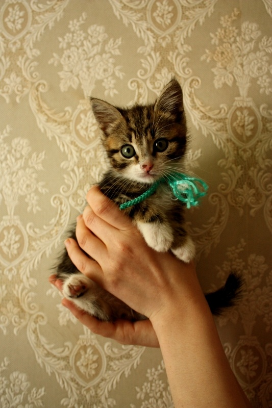 This makes me want another kitty!