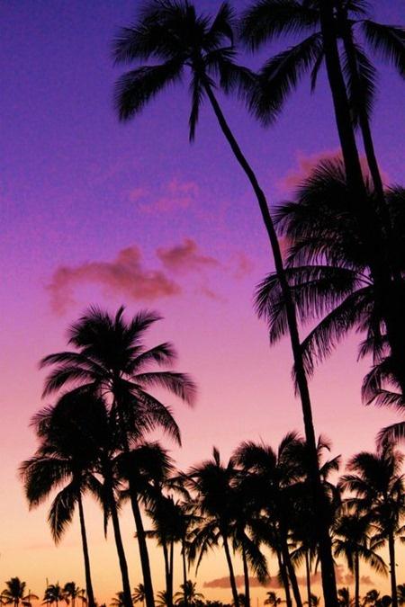 aloha, sun