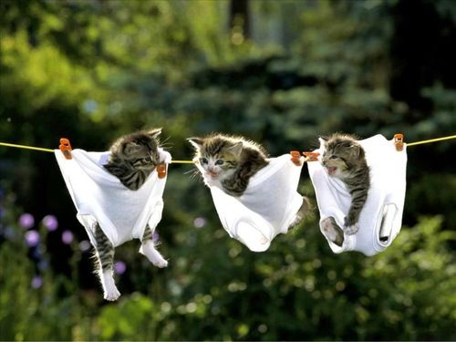 Three little kitties hangin' on the line--#kittens #animals #pets #adorable #photo #funny