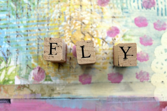 Fly Collage Photograph Wall Art Print by bethnadlerphoto on Etsy, $24.00