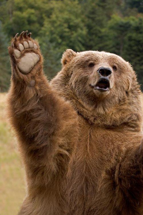 brown bear high five...