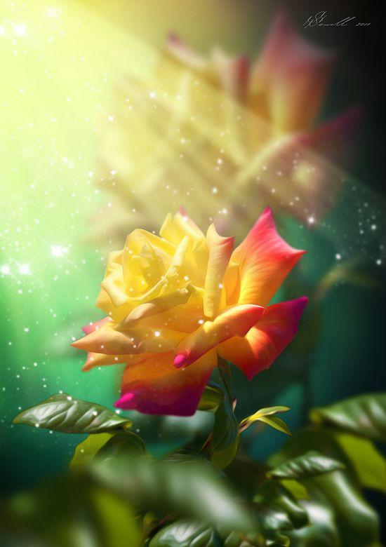 Juicy Rose by Svetlana Sewell, via 500px
