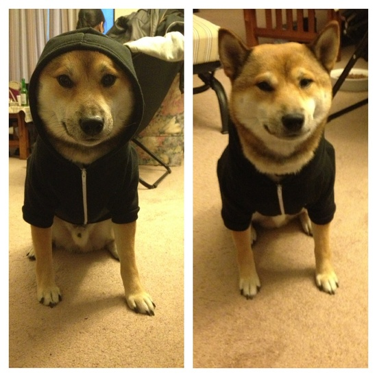 every dog needs a hoodie
