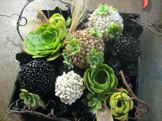 http://www.alieliflorals.com/blog/wp-content/uploads/2010/03/succulent-bean-ball-1-771228-1024x768.jpg