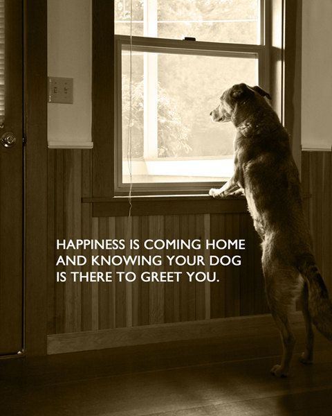 So true. This is exactly what my dog does..watches my car pull in the driveway ?