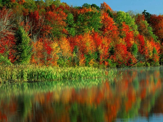 reflecting the color of the leaves