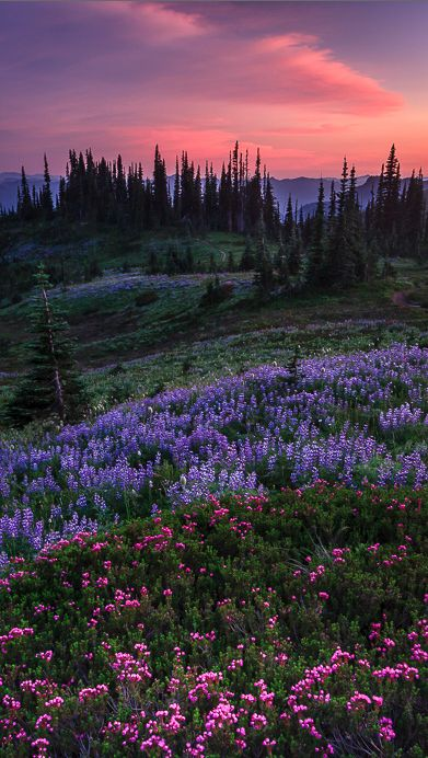 Pastel splendor in the Nisqually Valley of Washington State • photo: Bryan Swan on Flickr