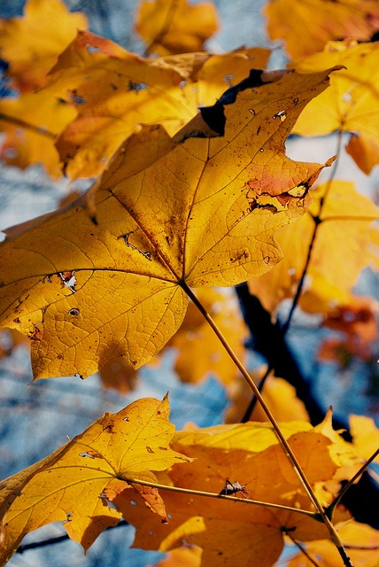 #fall #autumn #leaves