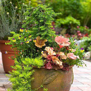 Pretty Container garden