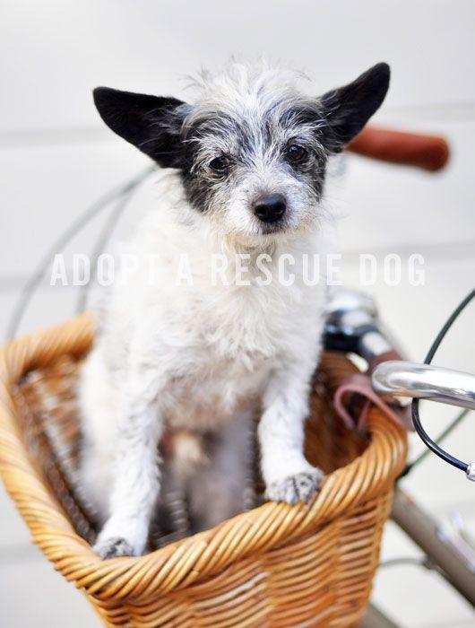 Adopt a rescue dog.
