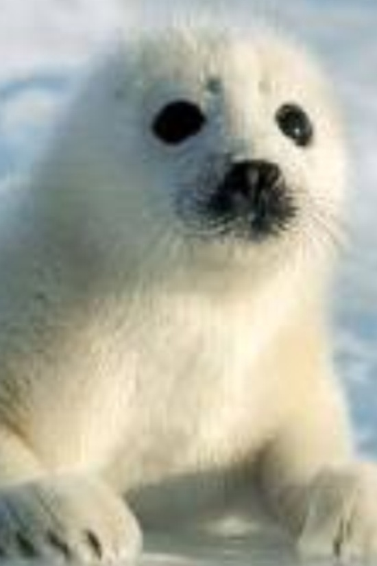This is probably the cutest baby animal EVER!!!