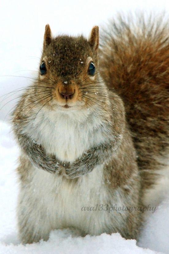 @ara133photography #animal #photography #cute