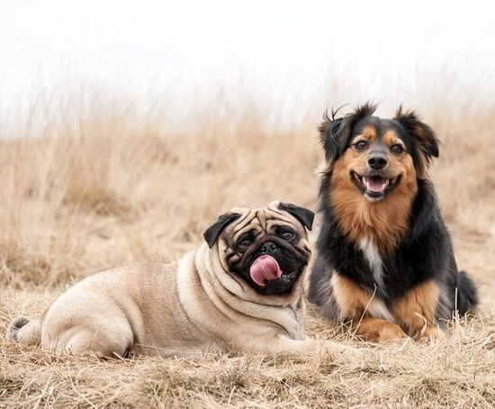 Pug & Friend