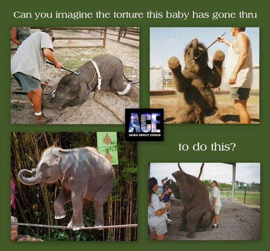 STOP CIRCUS SUFFERING AROUND THE WORLD!!! Please sign the petitions:  www.ipetitions.co... secure.peta.org/... www.gopetition.co...