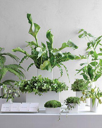minimalist green arrangments