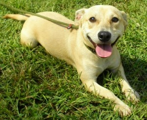Millie is an adoptable Terrier Dog in Lincolnton, NC. At Lincoln County Animal Services, there is an $85 dollar adoption fee. This fee covers the following services for your pet: * Spay or Neuter * Wo...