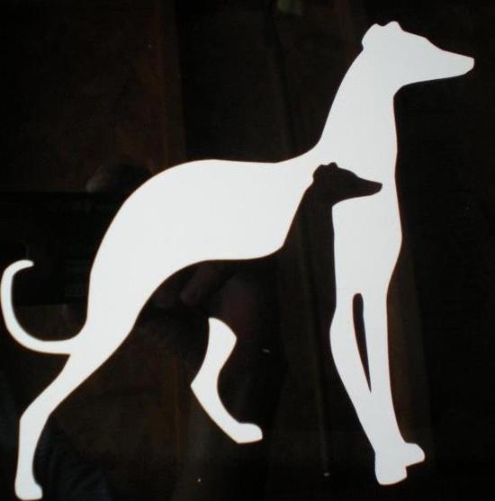 Greyhound - Whippet