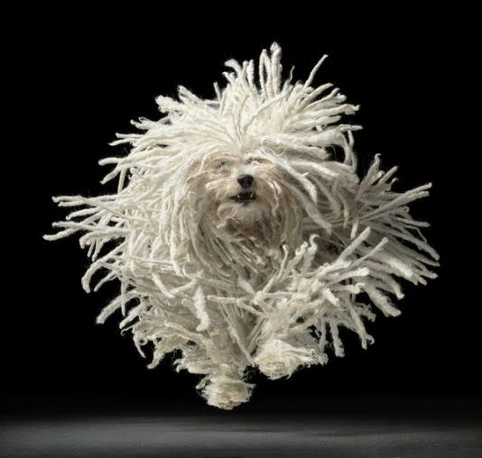 Amazing dog. Silly silly hair. Just great.