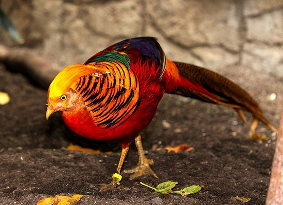 Paradise Bird by Boshmais, via Flickr
