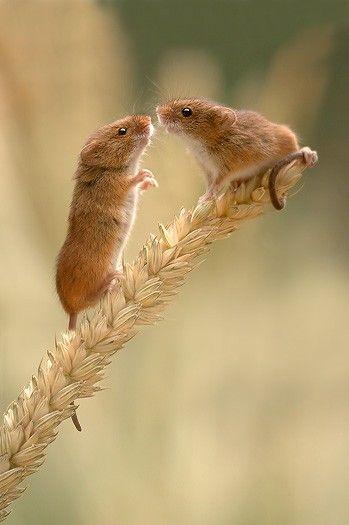 Courtship #wild #animals