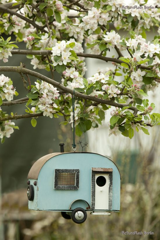 birds house