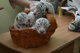cute animal baby