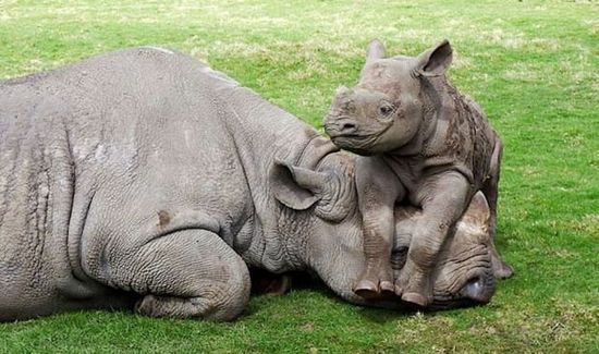 Lovely Photos of Mother and Baby Animals